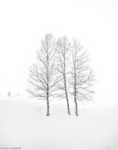 7009 Winter Landscape, Biei, Japan