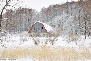 7061 Winter Landscape, Barn in Oumu, Hokkaido, Japan