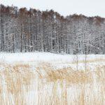 7064 Panorama Winter Landscape, Oumu, Hokkaido, Japan