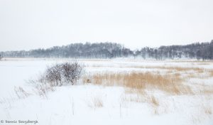 7069 Winter Landscape, Oumu, Hokkaido, Japan