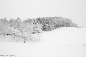 7072 Winter Landscape, Oumu, Hokkaido, Japan