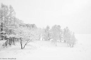 7074 Winter Landscape, Oumu, Hokkaido, Japan