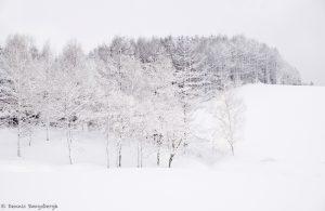 7077 Winter Landscape, Oumu, Hokkaido, Japan