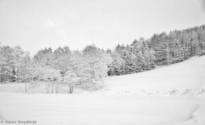 7078 Winter Landscape, Oumu, Hokkaido, Japan