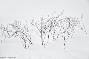 7079 Winter Landscape, Oumu, Hokkaido, Japan