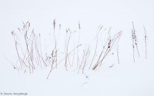 7083 Winter Landscape, Hokkaido, Japan