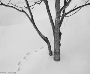 7084 Winter Landscape, Hokkaido, Japan