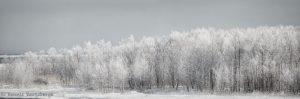 7085 Panorama Winter Landscape, Hokkaido, Japan