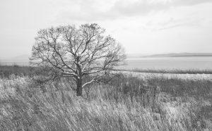 7086 Winter Landscape, Saroma Lake, Hokkaido, Japan