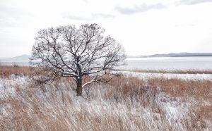 7087 Winter Landscape, Saroma Lake, Hokkaido, Japan
