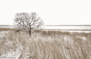 7088 Winter Landscape, Saroma Lake, Hokkaido, Japan