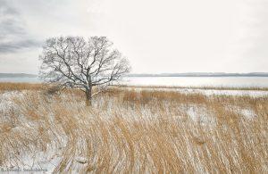 7089 Winter Landscape, Saroma Lake, Hokkaido, Japan
