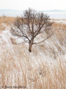 7115 Winter Landscape, Saroma Lake, Hokkaido, Japan