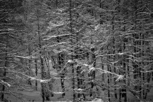 7118 Winter Landscape, Hakkaido, Japan
