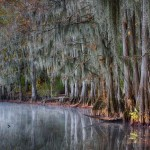1885 November Morning, Caddo Lake