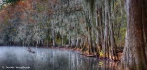 1885 November Morning, Caddo Lake