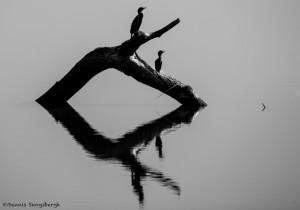 2174 Morning Reflections