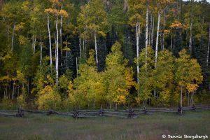 7240 Autumn Colors, Mount Sneffels Wilderness of Uncompahgre National Park, CO