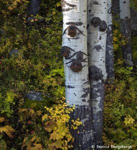 7261 Autumn Colors, San Juan Mountains, CO