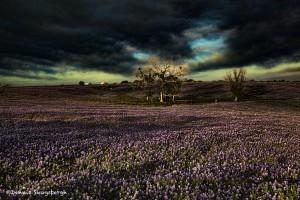 1042 Sunrise, Bluebonnets, Ennis TX