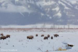 1044 Harsh Yellowstone