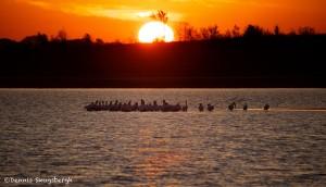 1575 Sunrise, Pelicans, Hagerman National Wildlife Refuge, TX