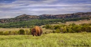 1872 Bison Habitat