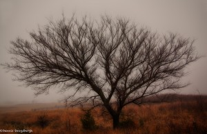 1905 Foggy Winter Morning