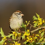 1338 Chipping Sparrow, Block Creek Natural Area, Kendall County, TX