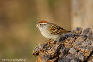 1339 Chipping Sparrow, Block Creek Natural Area, Kendall County, TX