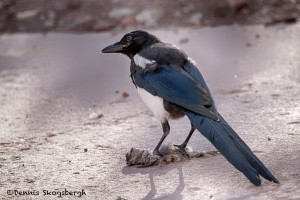 1409 Magpie with dinner, Aspen, CO