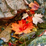 1674 Autumn Leaves, Hadlock Brook