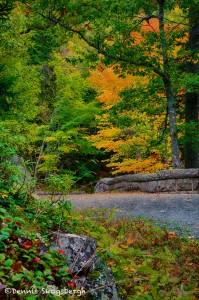 1675 Autumn Colors