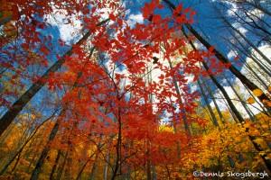 1703 Autumn Color