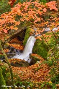 1709 Cascade and Autumn Color