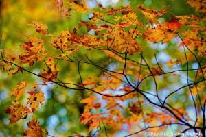 1712 Autumn Color