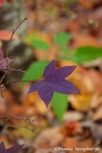 1713 Autumn Color