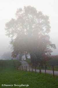 1717 Foggy Morning, Hyatt Lane