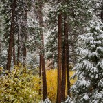 1756 Snowing in Yosemite
