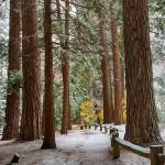 1757 Yosemite Snow
