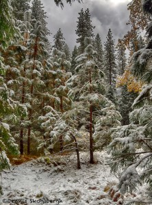 1764 Snow, Yosemite Valley