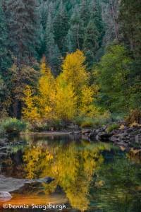 1791 Autumn Colors, Merced River