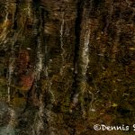 6088 Fall Color Water Reflections, Smokey Mountains National Park, TN