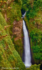 1981 Waterfall