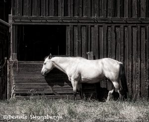 5369 Oregon Farm, Horse