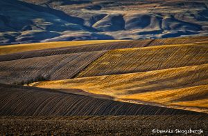 5379 Wheat Field Terrain, Wasco, OR