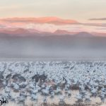 5638 Foggy Sunrise, Bosque del Apache NWR, New Mexico