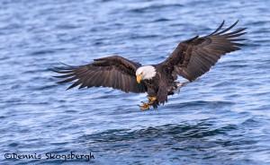 5288 Bald Eagle, Homer, Alaska