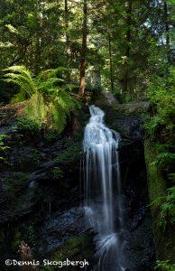 6078 Fern Canyon Waterfall, Russian Gulch State Park, Mendocino, CA