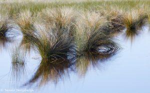 7367 Wetlands, Galveston State Park, Texas